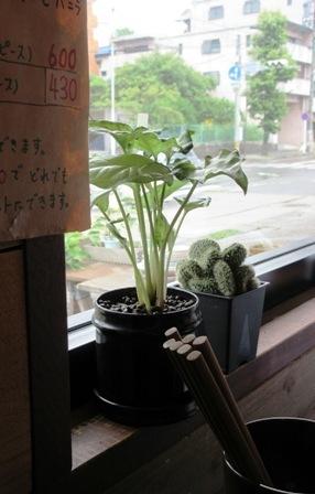 窓際の植物.JPG